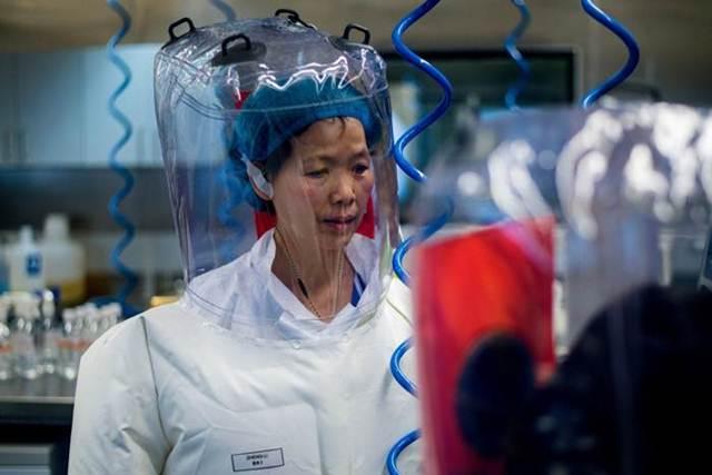 """สือเจิงลี่ นักวิจัยประจำสถาบันไวรัสวิทยาเมืองอู่ฮั่น ฉายา """"มนุษย์ค้างคาวหญิงแห่งเมืองจีน"""" ผู้ตกเป็นเป้าหมายเลขหนึ่งของกระแสวิพากษ์วิจารณ์เกี่ยวกับต้นตกแพร่เชื้อไวรัสโคโรนาสายพันธุ์ใหม่"""