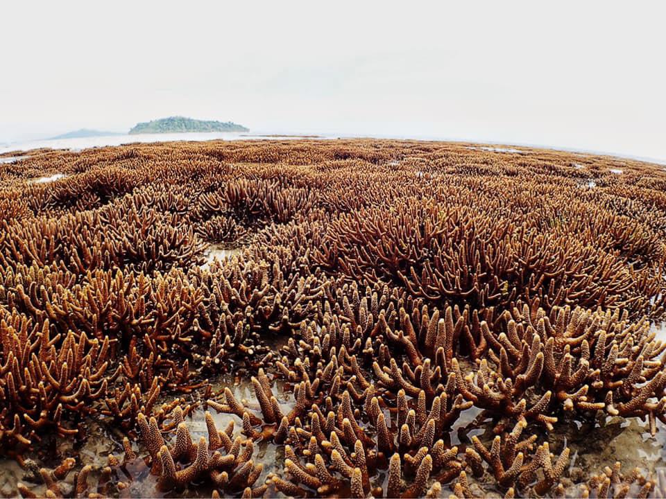 """ดร.ธรณ์ ปลื้ม """"พีพีโมเดล"""" ฟื้นปะการัง """"เกาะยูง"""" กลับมาสมบูรณ์อย่างมาก"""