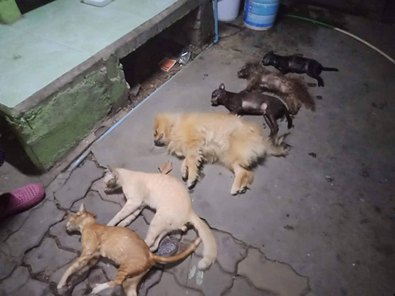 เจ้าของเข้าให้ปากคำเพิ่มหลังเพื่อนบ้านวางยาฆ่าสุนัขและแมวรวม 7 ตัว