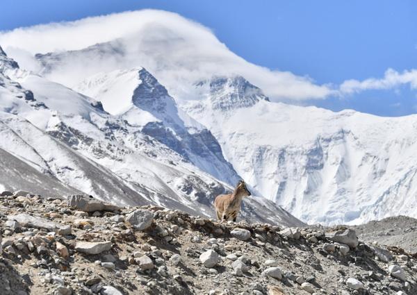 'ธรรมชาติและชีวิตน้อยใหญ่' บนภูผาโชโมลังมา