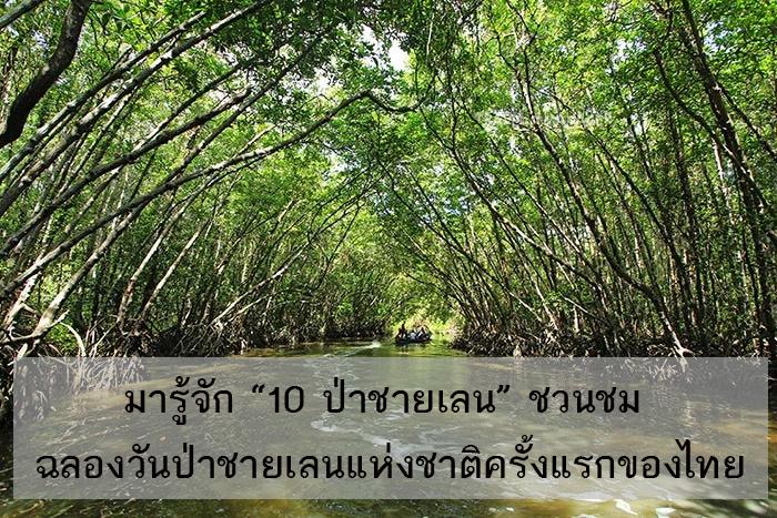 """มารู้จัก """"10 ป่าชายเลน"""" ชวนชม ฉลองวันป่าชายเลนแห่งชาติครั้งแรกของไทย"""
