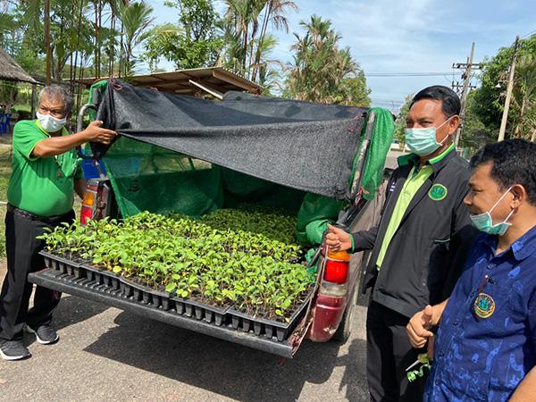 กรมส่งเสริมการเกษตร มอบพันธุ์มะเขือ 2 หมื่นต้น ช่วยเกษตรกรที่ได้รับผลกระทบจากโควิด-19