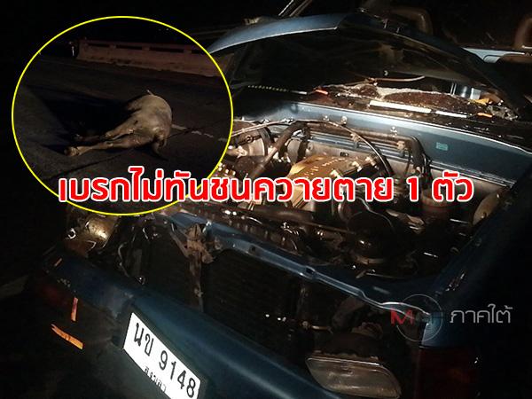 ระทึก! แม่ค้าขับกระบะชนควายเดินบนถนนตาย 1 ตัว คนขับเจ็บเล็กน้อย-รถพังยับ