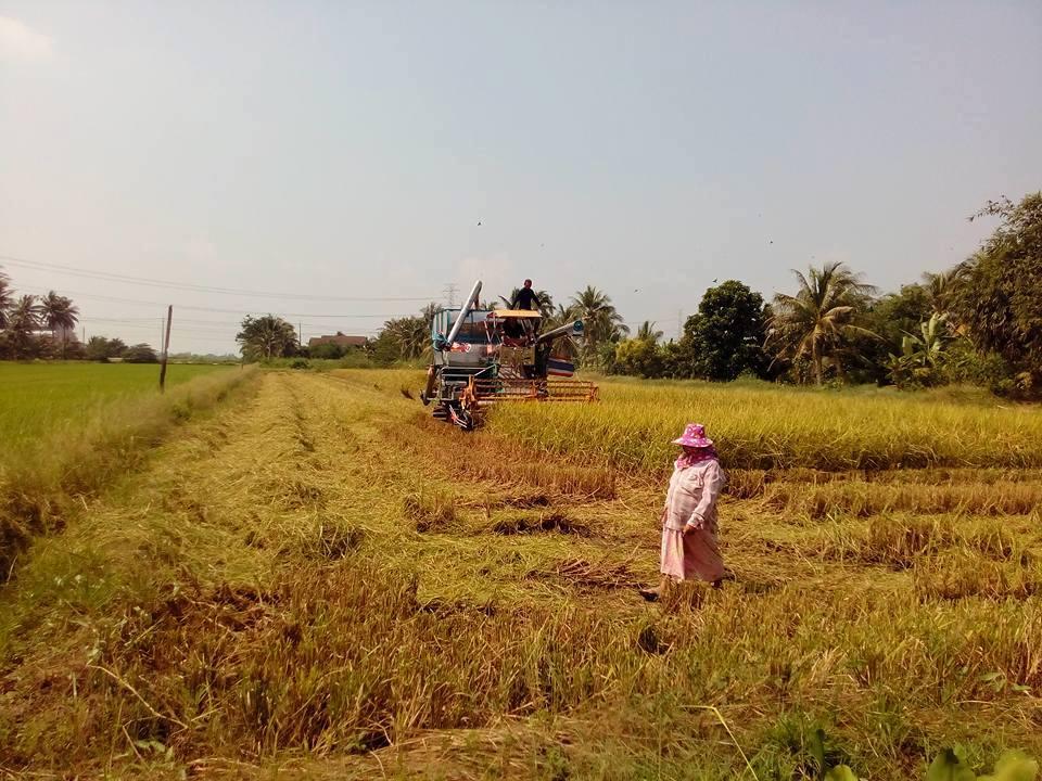 กรมส่งเสริมการเกษตรแนะเกษตรกร วางแผนรับมือฝนทิ้งช่วง ปลูกพืชอายุสั้นลดความเสี่ยงขาดทุน