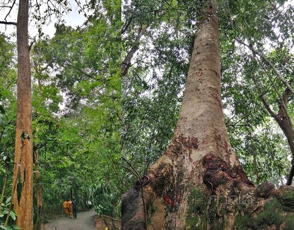 ธรรมอันสงบ สงัด สะอาด ยังครอบคลุมพื้นที่ของวัดป่าบ้านตาด