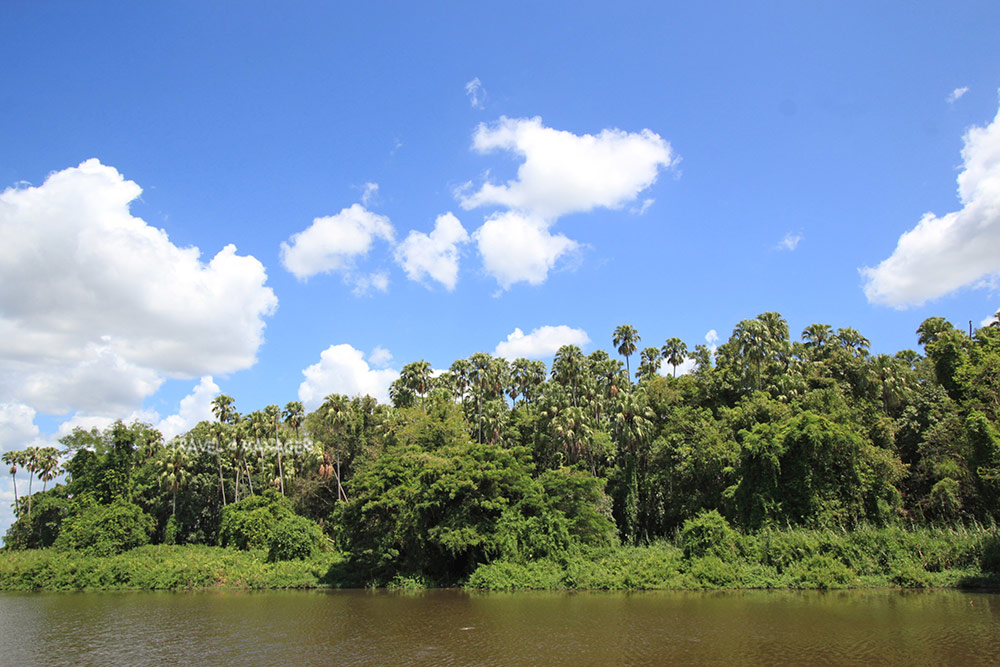 ป่าคำชะโนด เป็นเกาะกลางน้ำ