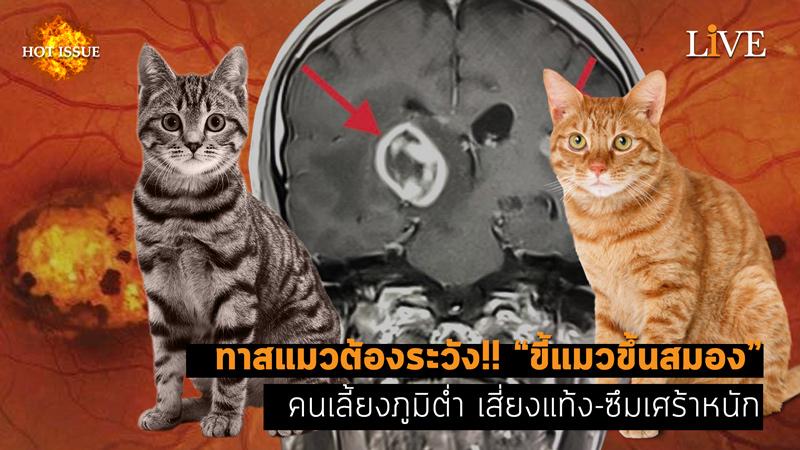 """[คลิป] ทาสแมวต้องระวัง!! """"ขี้แมวขึ้นสมอง"""" คนเลี้ยงภูมิต่ำ เสี่ยงแท้ง-ซึมเศร้าหนัก"""