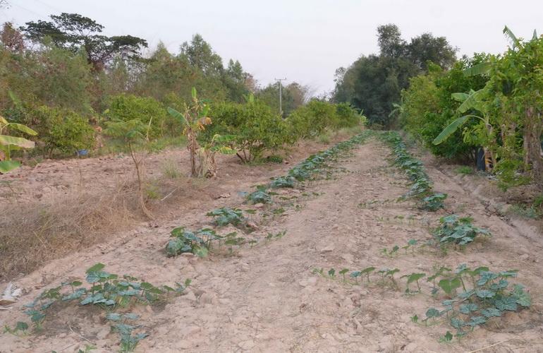 เกษตรกรเมืองน้ำดำมีลุ้น!สภาเกษตรชงขุดบ่อบาดาลต้านภัยแล้งกว่า200บ่อ
