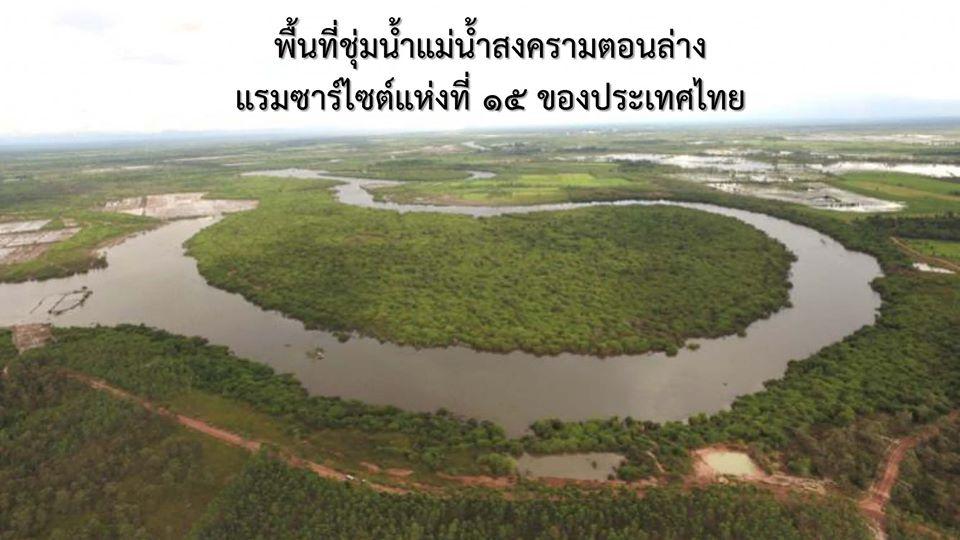 แม่น้ำสงครามตอนล่าง จังหวัดนครพนม ได้รับการขึ้นทะเบียนแรมซาร์ไซต์ แห่งที่ 15 ของประเทศไทย (ภาพ : เพจกระทรวงทรัพยากรธรรมชาติและสิ่งแวดล้อม-ประเทศไทย)