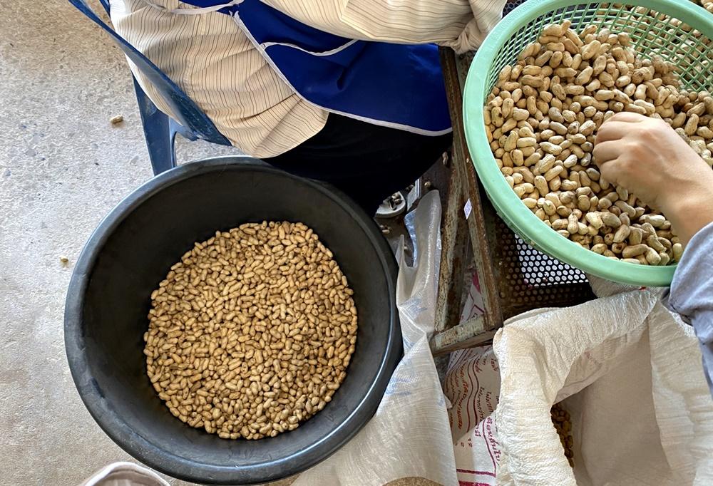 ก.เกษตรฯ ส่งเสริมเกษตรกรปลูกถั่วลิสง แปรรูปเป็นผลิตภัณฑ์สร้างรายได้สู้ภัยแล้ง