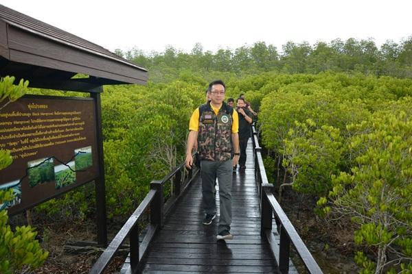 สำรวจวนอุทยานปราณบุรี จุดเด่นเส้นทางศึกษาธรรมชาติป่าชายเลน และป่าโกงกาง100 ปี