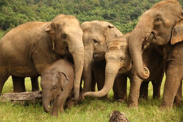 ลาซาด้าใช้เทคโนโลยีเพื่อชุมชน  จัด Virtual Tour ศูนย์อนุรักษ์ช้าง ช่วยเหลือช้างไทยและชุมชนผู้ปลูกกาแฟ