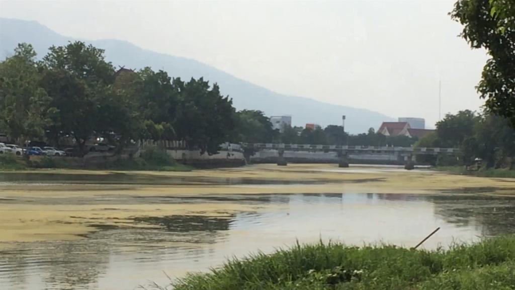 ตะลึง!น้ำปิงเชียงใหม่กลายเป็นสีมรกตสาหร่ายเขียวคลุมทึบวงกว้างทางยาวเหนือน้ำนิ่งช่วงผ่านเมือง