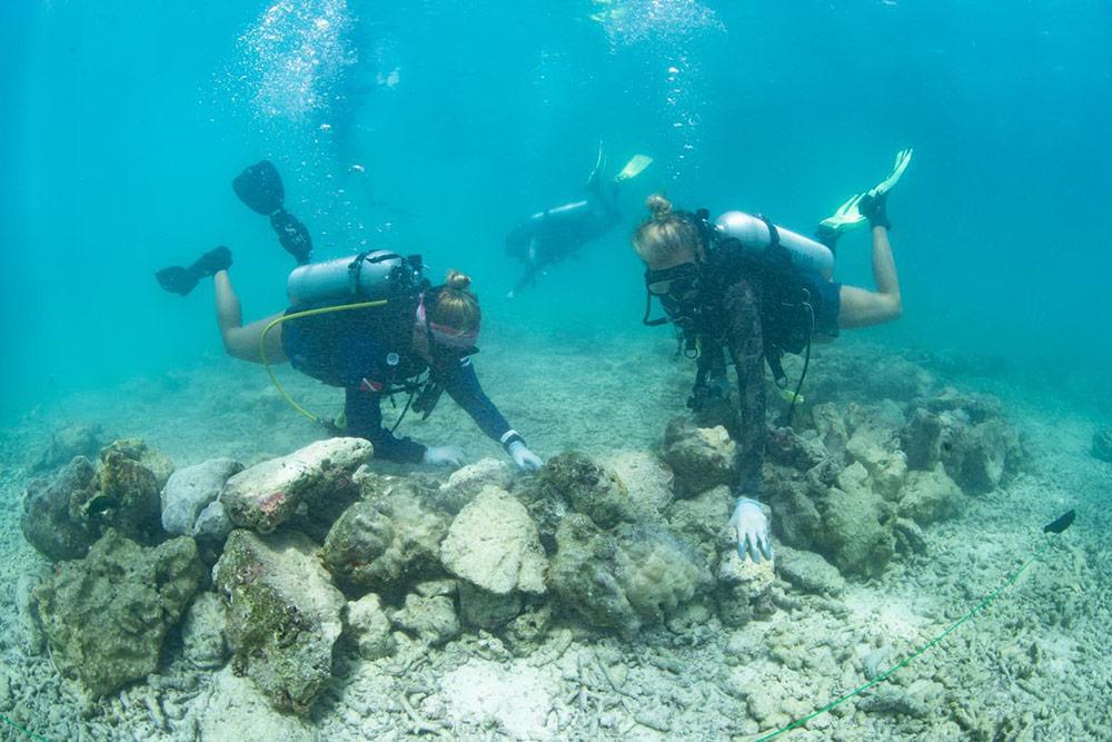 กระบวนการปลูกและฟื้นฟูปะการัง