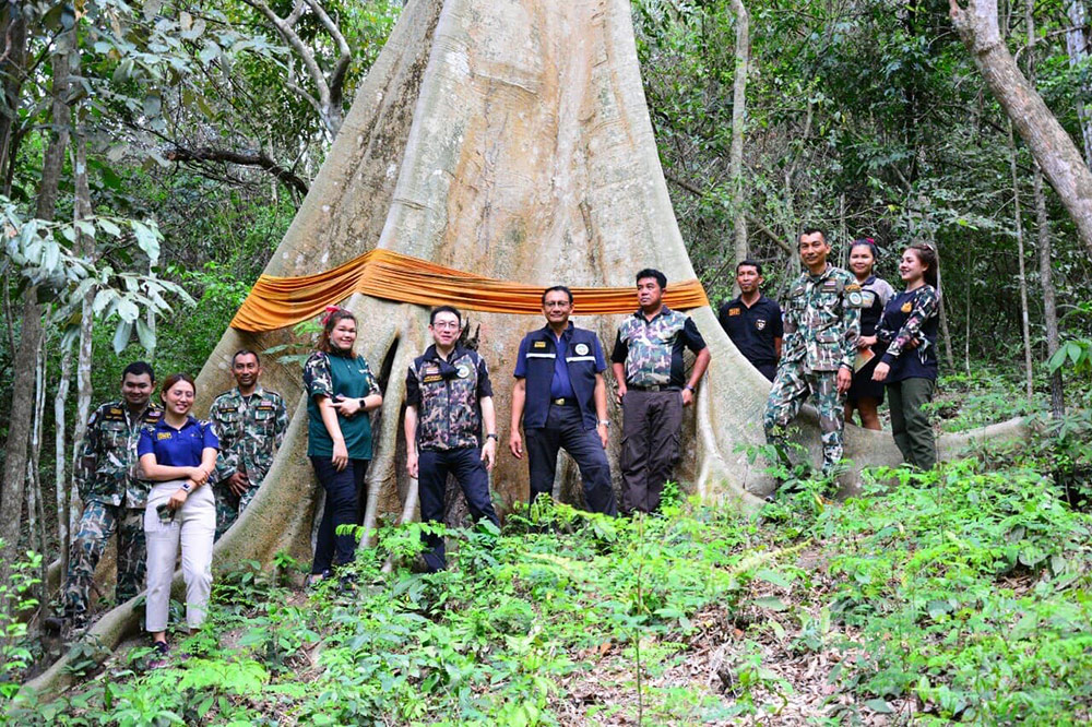ต้นยวนยักษ์ วนอุทยานห้วยน้ำซับ (ภาพ เพจ : วนอุทยานห้วยน้ำซับ)