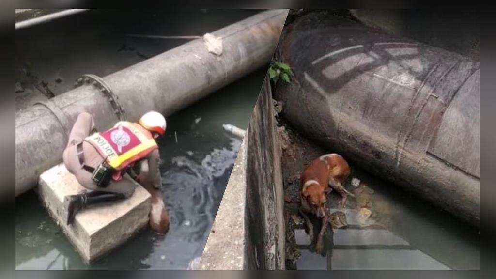 ชื่นชม! ตร.เร่งช่วยเหลือสุนัขตกน้ำ ล่าสุดรอดปลอดภัยแล้ว (ชมคลิป)
