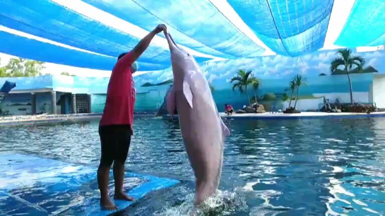 โอซีเวิลด์จันทบุรี แหล่งแสดงโลมาแสนรู้พร้อมเปิดรับนักท่องเที่ยว 13 มิ.ย.นี้