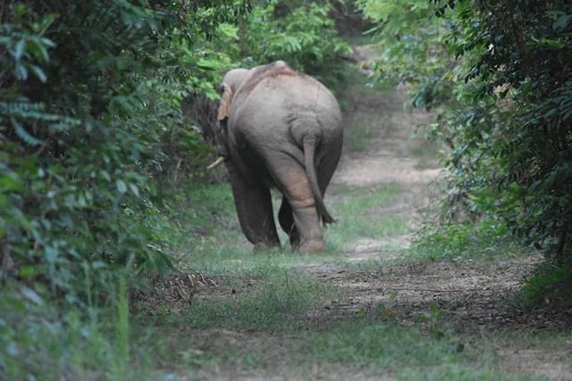 ช้างป่าเขาใหญ่ เดินชมนกชมไม้อย่างสบายใจนอกพื้นที่อุทยานฯ