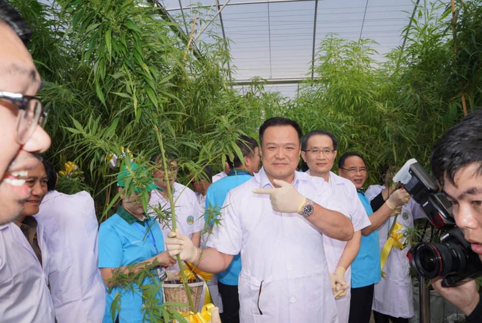 """""""อนุทิน"""" เดินหน้าแก้พ.ร.บ.ยาเสพติด ปลดล็อกผู้ป่วย-เกษตรกร ปลูกกัญชารักษาโรคได้"""