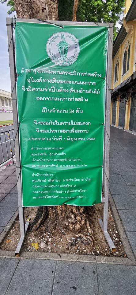 กทม. ติดประกาศโครงการขุดอุโมงค์ลอดถนน ล้อมย้านต้นไม้ (ภาพ : จากเพจ Chedha Tingsanchali) width:444 height:960 type:JPEG