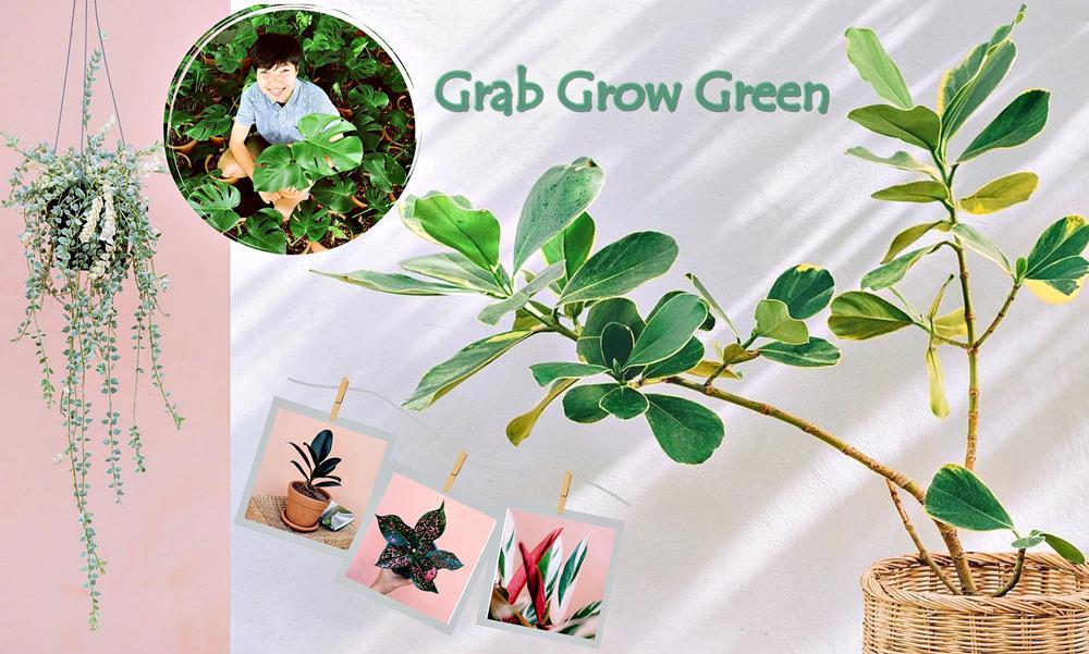 """เมื่อช่างภาพขายต้นไม้! """"Grab Grow Green"""" เล่าเรื่องต้นไม้ผ่านรูปถ่าย สร้างจุดขายด้วยมุมมองใหม่ ยุค New Normal"""