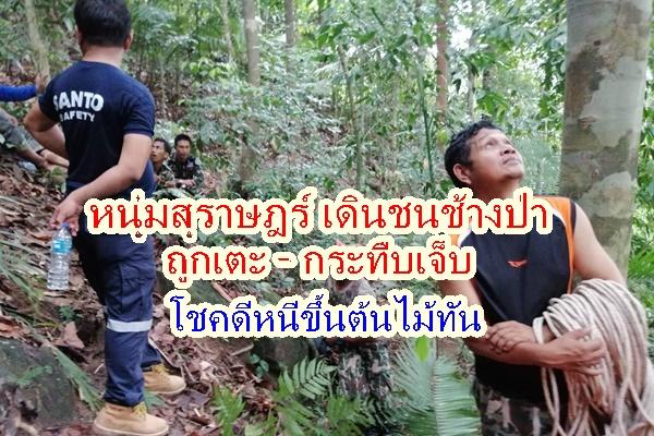 หนุ่มสุราษฎร์ออกหาของป่าเดินชนช้างป่าเข้าอย่างจังถูกเตะ-ไล่กระทืบ จนบาดเจ็บ