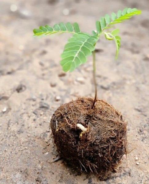 มูลช้างป่า! แปลงเพาะต้นอ่อนชั้นดีของผืนป่า