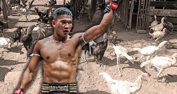 """""""กุหลาบดำ พี.เค.แสนชัยฯ"""" นักมวยไทยเจ้าของฟาร์มไก่ เปลี่ยนความชอบเป็นรายได้เสริม"""