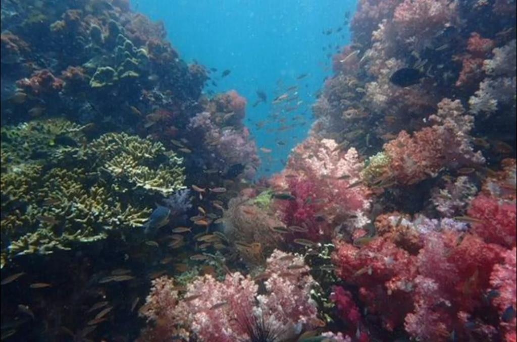 อช. ตะรุเตา อวดภาพใต้ท้องทะเลหลังไร้มนุษย์รบกวนช่วงโควิด-19