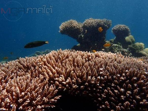 อุทยานแห่งชาติตะรุเตาอวดโฉมภาพโลกมหัศจรรย์ใต้ท้องทะเลหลังปิดท่องเที่ยวเกือบ 3 เดือน