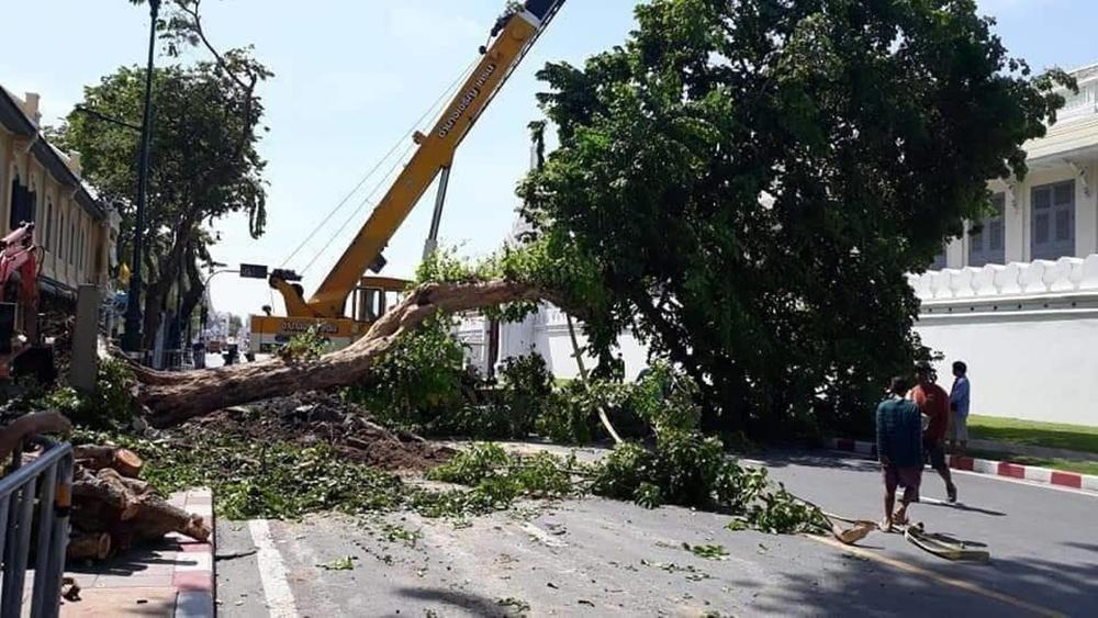 ชาวเน็ตสะเทือนใจ รื้อถอนต้นไม้หน้าพระลาน สร้างอุโมงค์ลอดถนน