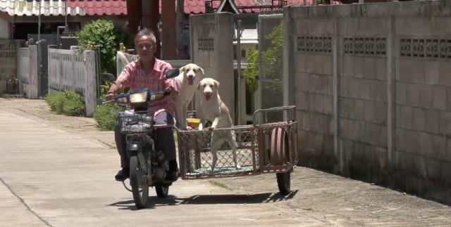 น่าทึ่ง!หมาแสนรู้เปิดประตูรั้วให้ ผช.ผญบ.เมืองเถิน-โดดขึ้นหลังคารถยังกับบอกเลขสองตัวบน