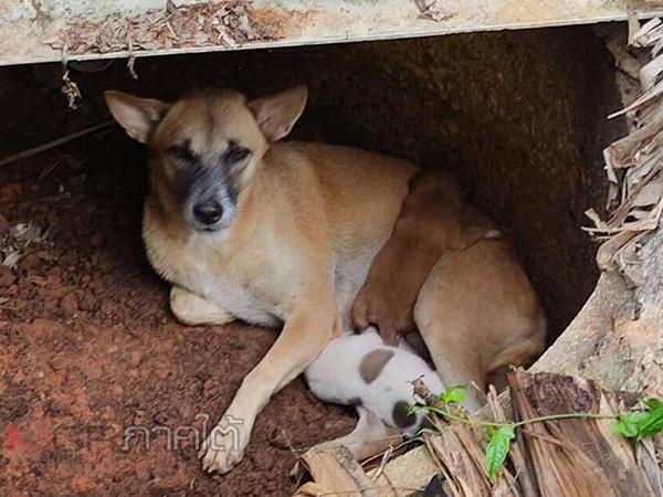 ยืนยัน 2 ลูกหมาจรจัดที่จมน้ำในบ่อยังปลอดภัยดี เตรียมส่งมอบให้ผู้ใจบุญรับไปอุปการะ