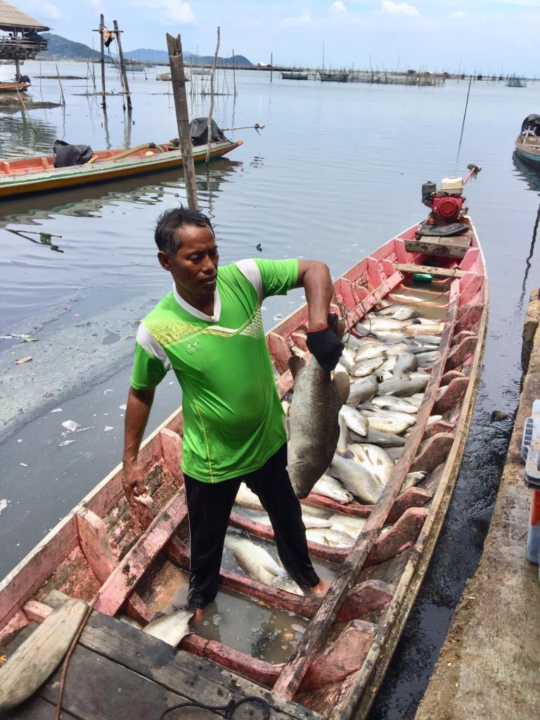 พณ.ช่วยเกษตรกร แก้ปัญหาราคาปลากระพงตกต่ำ