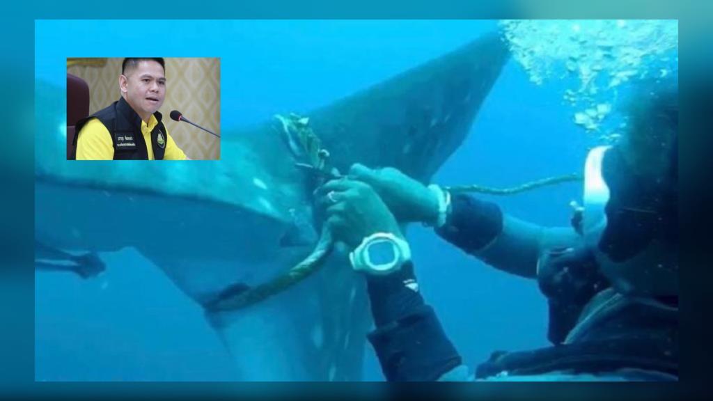 ทส.ขอบคุณ ครูสอนดำน้ำพยายามช่วยตัดเชือกพันหางฉลามวาฬเกาะเต่า