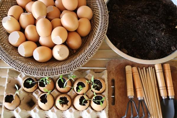 ได้ทดลองปลูกผักในเปลือกไข่