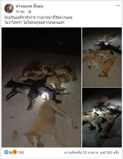 ชาวบ้านตากแดด ราชบุรี  รุมสาปแช่งคนวางยาเบื่อสุนัข ตาย 11 ตัว
