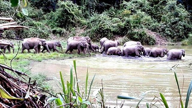 ลงมาเล่นน้ำทั้งครอบครัว! ฝูงช้างป่าละอู พากันเริงร่า ก่อนอุทยานเปิด