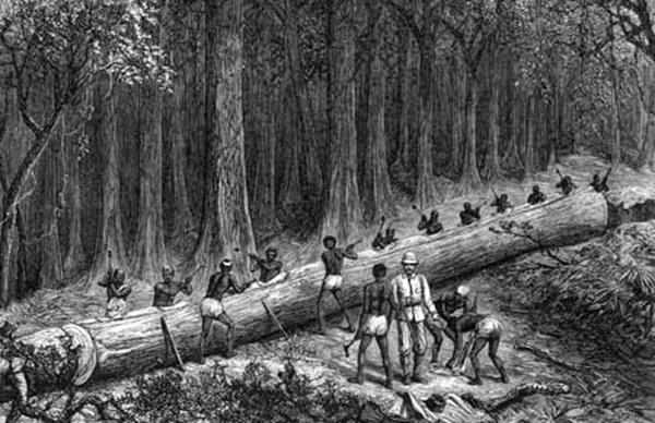 ชะตากรรมของป่าไม้ไทย เริ่มจากสวยตัด ๑ ปลูก ๔! ลงท้ายต้องปิดป่าก่อนป่าหมด!!
