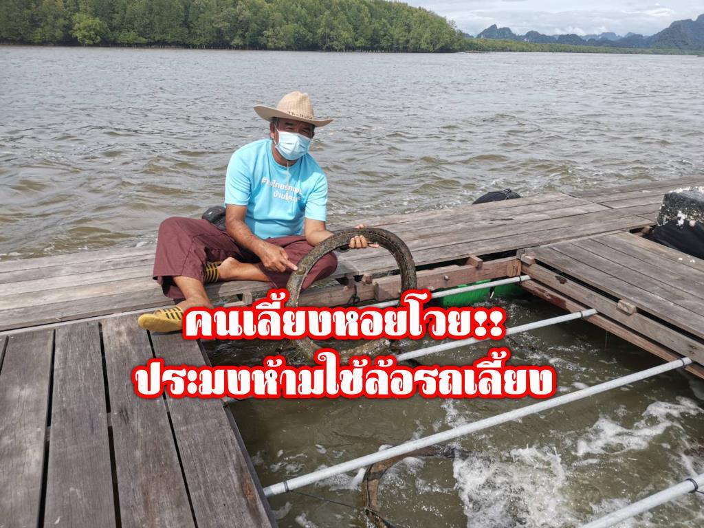 คนเลี้ยงหอยพังงาเดือดร้อนประมงห้ามใช้ยางรถเลี้ยงหอย ยันไม่มีสารตกค้าง