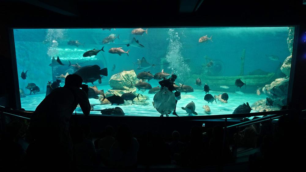พิพิธภัณฑ์สัตว์น้ำบางแสน (ภาพจาก Facebook : สถาบันวิทยาศาสตร์ทางทะเล)