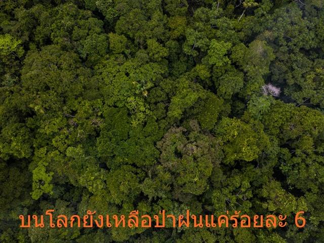 """WWF-ประเทสไทย ชี้เป้า """"ป่าฝนช่วยลดโลกร้อน"""" แต่พื้นที่ป่าเหลือร้อยละ 6"""