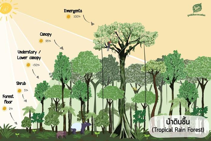 ป่าฝน หรือป่าดิบชื้น เป็นแหล่งผลิตออกซิเจนแหล่งใหญ่ รวมไปถึงเป็นแหล่งที่มีความหลากหลายของทางชีวภาพสูง