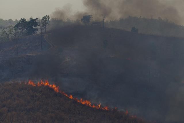 ความร้อนและความแห้งแล้ง ทำให้ผืนป่าแปรเปลี่ยนเป็นแหล่งเชื้อเพลิงอย่างดี ประกอบกับการเผาแปลงเกษตรในพื้นที่ใกล้เคียง ย่อมเป็นเชื้อไฟให้ป่าถูกเผาผลาญ