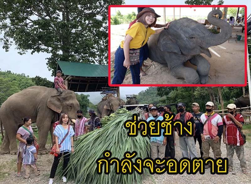 """""""หนึ่ง บางปู"""" ไม่กลัวดราม่า สร้างภาพ  วิ่งรอก เหนือ-อีสาน ช่วยช้างตกงานกำลังจะอดตาย"""