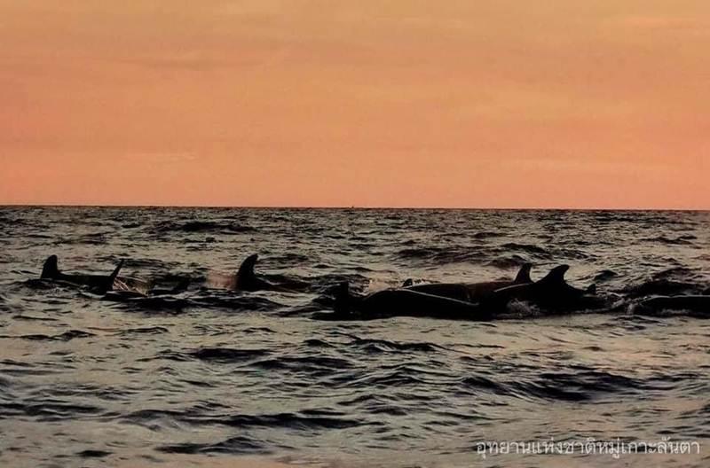 ฝูงวาฬเพชฌฆาตดำ