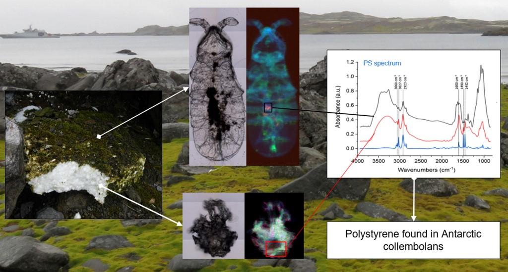 โชว์หลักฐานไมโครพลาสติกในสิ่งมีชีวิตที่แอนตาร์กติกา