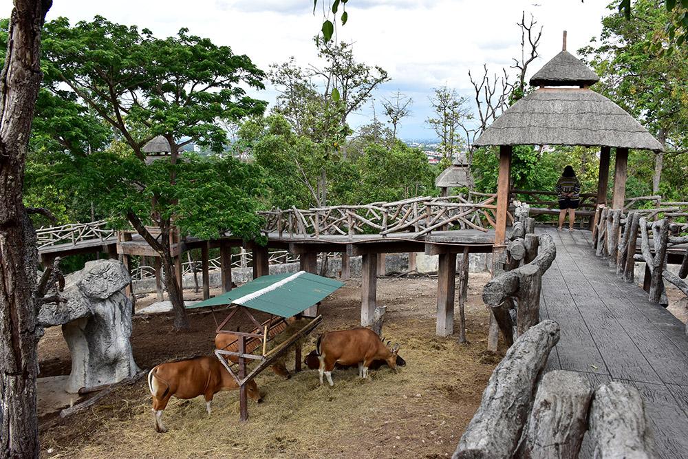 """เที่ยว """"6 สวนสัตว์ทั่วไทย"""" ลดราคาค่าเข้าชม 50%"""