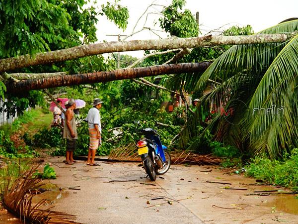 ลมหัวด้วนพัดถล่ม 3 หมู่บ้านที่พัทลุง ต้นไม้ล้มระเนระนาด หลังคาบ้านปลิวกว่า 100 หลัง