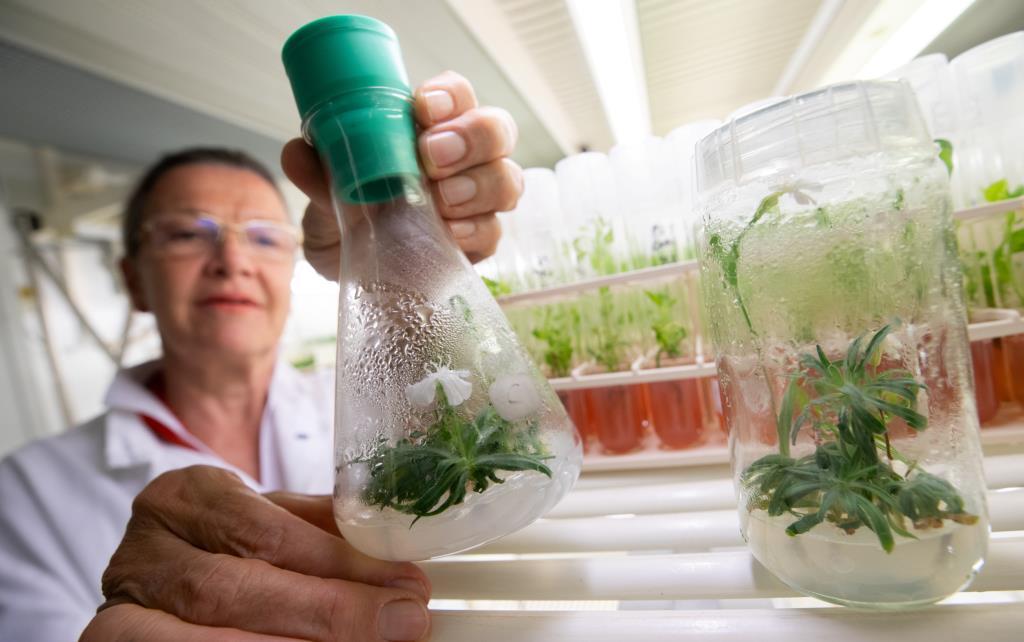 ศ.มาร์กิต ไลเมอร์ ถือขวดทดลองที่เพาะพืชอายุ 32,000 ปี (REUTERS/Lisi Niesner)